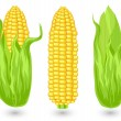 Stock Vector: Ears of ripe corn