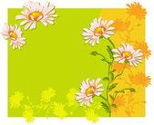 Ox-eye daisys — Stock Vector