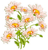 Bouquet of ox-eye daisys on white — Stock Vector