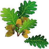 Oak acorns — Stock Vector