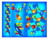 Molecule of DNA — Stock Vector