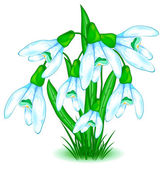 Snowdrops — Stock Vector