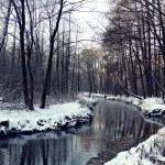 Kış. nehir — Stok fotoğraf