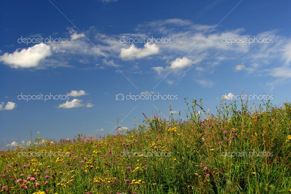 Landscape  Stock Photo #1169386