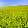 Foto Stock: Green meadow field