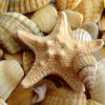 Starfish — Stock Photo #1205552