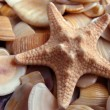 Starfish — Stock Photo #1206407