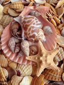 Cockleshells and starfish — Stock Photo
