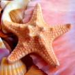 Starfish — Stock Photo #1214021