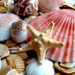 Cockleshells and starfish — Stock Photo #1251724