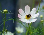 Bee on a flower — Stockfoto