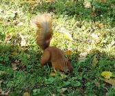 Esquilo. — Foto Stock