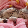 Kitty sleeping — Stock Photo #2161514