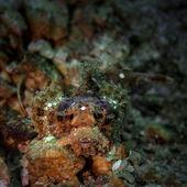 少年大胡子的蝎子 — 图库照片