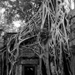 Angkor temple ruins — Stock Photo