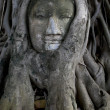 Ancient buddha head — Foto Stock