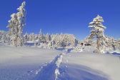 Paese delle meraviglie invernale — Foto Stock