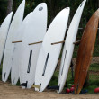 Surf boards - Foto Stock
