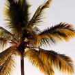 Palm close-up - Stock Photo