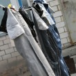 Stock Photo: Drying jeans