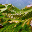 Royalty-Free Stock Photo: Rice terraces in mounting of Yunnan,