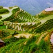Stock Photo: Rice terraces in mounting of Yunnan,