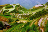 Rice terraces in mounting of Yunnan, — Stock Photo