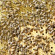 Bees on brood comb - Stock Photo