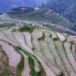 Royalty-Free Stock Photo: Rice terraces in mounting, China