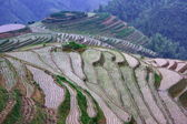 Rice terraces in mounting, China — Stock Photo
