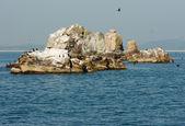 Birds island — Stock Photo