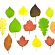 Set colorful autumn leaves - Stockfoto