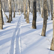 Track left ski between tree in park — Stock Photo #1543316