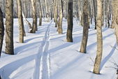 Track left ski between tree in park — Stock Photo