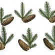 Stock Photo: Set fir tree branches