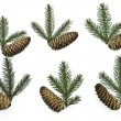 Stockfoto: Set fir tree branches