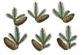 Conjunto abeto galhos de árvores — Foto Stock