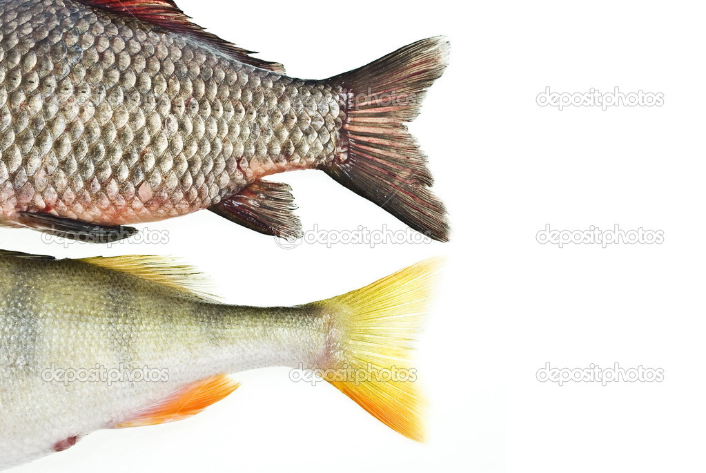 Fish tails stock photo alexan66 1566534 for Fish and tails