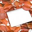 Stock Photo: Blank note paper