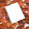 Blank note paper on autumn leafs — Stock Photo