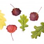 Set autumn leafs — Stock Photo #1606463