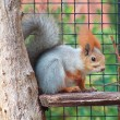 Squirrel — Stock Photo #1180970