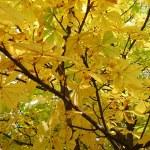 Chestnut autumn — Stock Photo #1240938