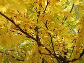 Chestnut autumn — Stock Photo