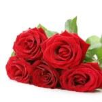 Fine roses — Stock Photo #1452911