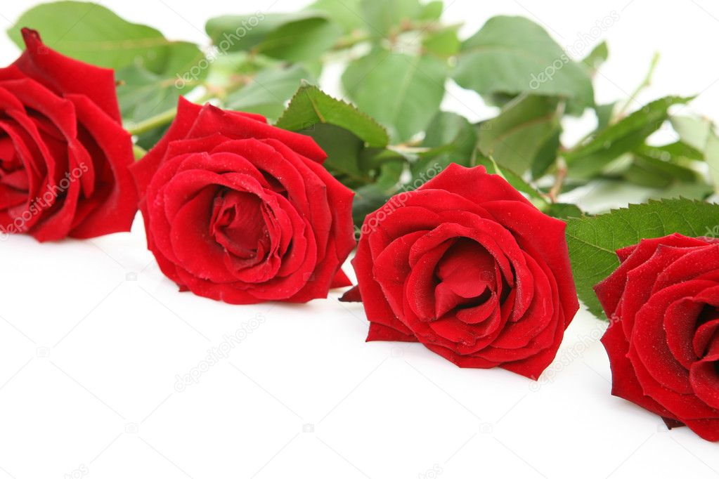 Scarlet roses — Stock Photo #1467386