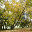 Autumn grove — Foto Stock
