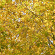 yellow foliage — Stock Photo