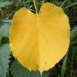 Yellow leaf — Stock Photo #1236199