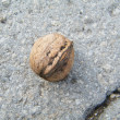 Stock Photo: Nut and stone
